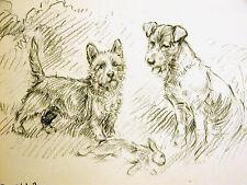 K.F. Barker 1933 CAIRN TERRIER & HOUND Hunting Rabbit Dog Vintage Print Matted