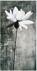 Hallmark With Sympathy Bereavement Card - Lily Black and white