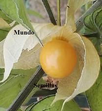 Physalis Peruvian - Cape Gooseberry - Fruit Cometible - 300 Seeds Seeds