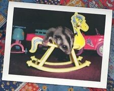 SUGAR GLIDER on Rocking Horse 100 Personalized Business Cards #653
