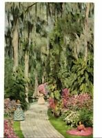 C.1960 Winter Haven FL Cypress Gardens Postcard Blooming Azaleas