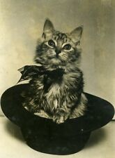 France Young Cat Playful Posing in Hat Chat & Chapeau Old Press Photo 1932