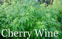 C-W Hemp Seed. 25 Viable healthy Seeds ready to grow!