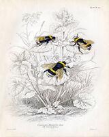 Bees VINTAGE ENAMEL METAL TIN SIGN WALL PLAQUE