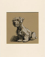 SEALYHAM TERRIER SEATED DOG LOVELY 1930'S CECIL ALDIN DOG ART PRINT MOUNTED