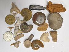 FOSSIL COLLECTION - Dinosaur Ammonite Shark Orthoceras Stingray Crynoid (#U314)