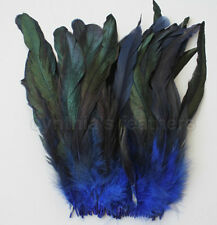 """80+ pcs.(16g) 8-10"""" half bronze royal blue schlappen rooster coque tail feathers"""
