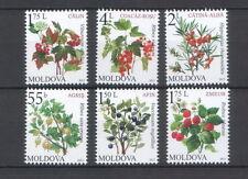 Moldova 2013 Flora Fruiting shrubs 6 MNH stamps