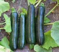 ZUCCHINI Black Beauty 10 Seeds HEIRLOOM Vegetable BUSH Zuchinni Squash Courgette