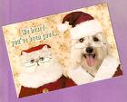 Bearded Collie Beardie Cat Kitten Santa Christmas Cards Box of 10 Made in US*