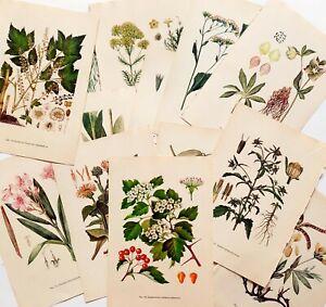 Botanical Illustrated Medicinal Plants Flowers book pages ephemera 10 sheets