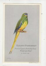 Elegant Parrakeet Caperns Seed Vintage Plain Back Advert Card Birds US044