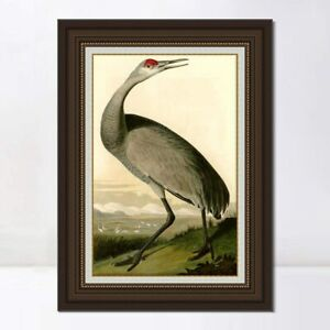"""30""""x40"""" Framed Canvas Art Giclee Print Hooping Cranen by John James Audubon"""
