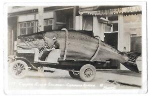 Copper River Salmon  Cordova Alaska  Exaggerated Fishing  Postcard
