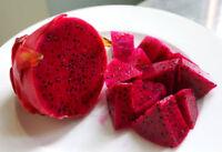 2 RED DRAGON FRUIT TREE PLANT  VINE CUTTINGS(PITAHAYA) 9 Inch Cutting or LONGER