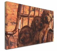 More details for irish red setter puppy dogs x-large 30