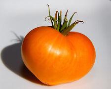 Tomate - German Orange Stawberry - 5+ Samen RIESIG und FEIN!