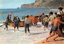 BR9608 Nazare Arrasto dos barcos cow vaches  portugal