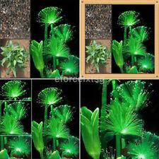 100Pcs Rare Dark Night Glowing Fluorescent Flower Seeds Green Garden Plant HOT U