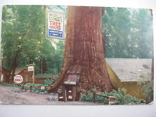1951 THE TREE HOUSE, REDWOOD HIGHWAY, CALIFORNIA POSTCARD
