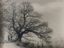 c1930 photographe ANONYME ARBRE TREE CAMPAGNE tirage argentique vintage FRANCE