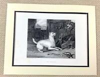 Edwin Landseer Antik Gravierung Aufdruck Terrier Hund Katze Ratte Fänger Malerei