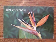 Hawaii HI Bird Of Paradise Postcard Old Vintage Card View Standard Souvenir Post
