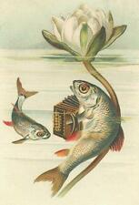 FISH PLAYING ACCORDION, SMALL FISH LISTENING, FROM VINTAGE POSTCARD, MAGNET
