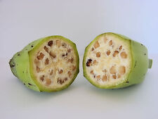 1000 SEMI BULK-COMMESTIBILE BANANA piante sementi (Musa Balbisiana var. Balbisiana)