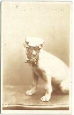 BULLDOG ? with cap vintage photo postcard  dog postcard 1905