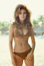 RAQUEL WELCH IN BROWN BIKINI BEACH COLOR POSTER PRINT