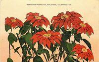 Linen Postcard CA Da056 Gorgeous Poinsettia San Diego Red Christmas Flowers