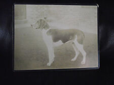 Matted 1920s Collectable Antique Photographs (Pre-1940)