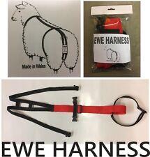 Ewe Prolapse Harness Truss Sheep Lambing Strap X 1