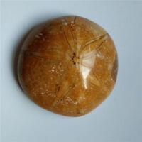 Natural Rare Sea Urchin Starfish Fossil Sand specimen