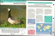 Bernache nonnette Branta leucopsis - Barnacle Goose FICHE OISEAU BIRD