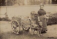 Attelage de chien Belgique Holland ? Photo Vintage Albumine ca 1880