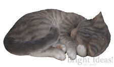 Vivid Arts - REAL LIFE CATS -Tabby Cat Sleeping