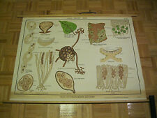 Jurica Biology Yeast, Cup Fungus, & Mildew Aj Nystrom & Co Chicago Science Chart
