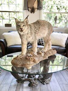 Lynx Full Mount