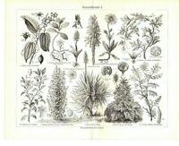 Holzstiche: Arzneipflanzen Original 1906 Bild Tafel Aloe Arnica Baldrian Crocus