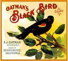 Highgrove Black Bird Crow Orange Citrus Fruit Crate Label Art Print