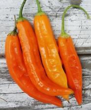 Aji amarillo Chili aus Peru 10+ Samen - Saatgut - Seeds - Gemüsesamen