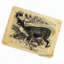 Deer Deco Magnet, Decorative Fridge Refrigerator Game Animal Hunter Gift
