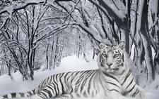 24X32Inch Tiger white in snow forest Beautiful QUALITY CANVAS Poster Art