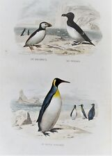1d-74 Gravure 19e oiseaux macareux, pingoin, grand manchot Buffon 1853