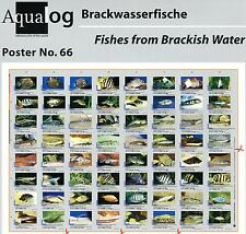 AQUALOG Poster Brackish Water Fishes, LAMINATED