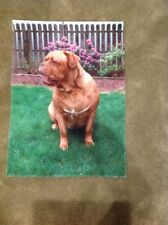 "New Dogue de Bordeaux - French Mastiff - 16.5"" x 12"" 2-Sided Garden Flag Banner"