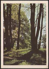 AD4137 Austria - Schlosspark bei Amras - Cartolina postale - Postcard