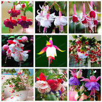 Purple Double Petals Fuchsia Bonsai Potted Flowers Plants Hanging 100 Pcs Seeds